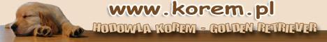 Golden Retriever Hodowla Korem